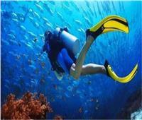 السياحة: لجان تفتيش على مراكز الغوص بجنوب سيناء.. وضبط كيانات غير شرعية