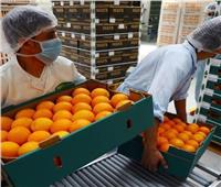 الزراعة: افتتاح سوق أكبر دولتين في العالم أمام الموالح المصرية قريبا