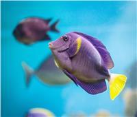 """دراسة جديدة تكشف سر إصابة الأسماك بـ""""العقم"""""""