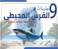 إنفوجراف| 9 معلومات عن القرش المحيطي المسئول عن هجوم شرم الشيخ