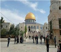 صور  فلسطينيون عند المسجد الأقصى للاحتفال بالمولد النبوي