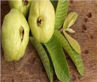 فوائد أوراق الجوافة للوقاية من الأمراض.. أبرزها نزلات الإنفلونزا والسكري