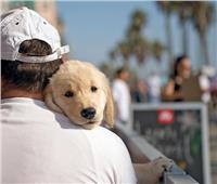 كيف ظهرت الكلاب.. وما سر ارتباطها بالإنسان؟