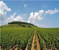 10 نصائح من «الزراعة» للحفاظ على المحاصيل خلال الطقس السيء