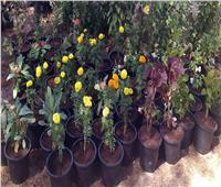 مياه سوهاج: زراعة نباتات جديدة من «الفل والياسمين» لأبناء المحافظة