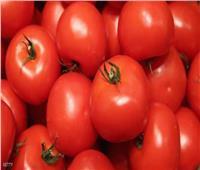 نقيب الفلاحين يكشف أسباب ارتفاع أسعار الطماطم وموعد انخفاضها