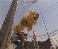 بالفيديو  أسد يهاجم أحمد الفيشاوي أثناء التصوير