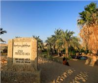 صور  كنوز «واحة سيوة».. جنة مصرية في بحر الرمال