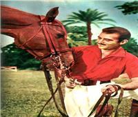 فيديو| تعرف على حكايات نجوم السينما مع الخيول العربية