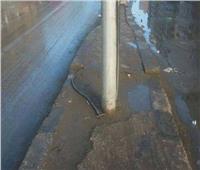 بعد صعق سيدة في البحيرة.. الكهرباء: صيانة أعمدة الشوارع اختصاص المحليات