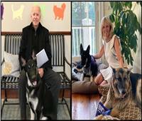 «ميجر» و«تشامب» ساكنان جديدان في البيت الأبيض.. كيف انضما لعائلة بايدن؟
