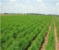 زراعة مليون فدان في سيناء على ترعة السلام والمياه المعالجة
