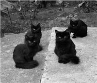 «القطط السوداء» تحتل سينما رويال