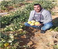 جني ثمار مشروع التنمية المتكاملة في 12 مزرعة بوسط سيناء