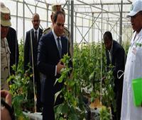 مليونيات مصر الزراعية.. «ثورة خضراء» لتأمين غذاء المصريين