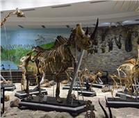 حكايات| المتحف الحيواني.. تذكرة إلى ما قبل التاريخ