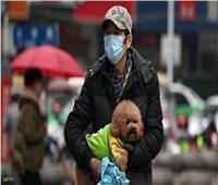انتبه.. حيوان أليف داخل منزلك يزيد فرص الإصابة بـ«فيروس كورونا»