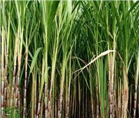 وزراء الري والزراعة والتموين يناقشون تطوير زراعة قصب السكر باستخدام طرق الري الحديثة