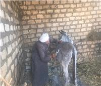 حكايات| حلاق الحمير بالمنيا.. 40 جنيهًا على «الرأس» تفتح بيت أسرة بأكملها