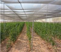 محافظ الوادي الجديد: زراعة 23 صوبة على مساحة 25 فدانا