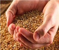 «الزراعة» تناشد الفلاحين شراء التقاوي المعتمدة لضمان إنتاجية عالية