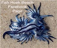 «تشبه التنانين»   مخلوقات بحرية غريبة بسواحل جنوب أفريقيا.. فيديو