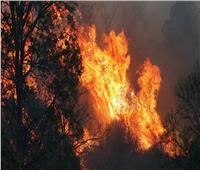مشاهد مخيفة لحرائق الغابات في أستراليا.. فيديو