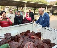 ضبط 900 كيلو «كبدة منتهية الصلاحية» بالقاهرة
