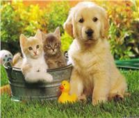 فيديو| طبيب نفسي يوضح أهمية تربية الحيوانات الأليفة