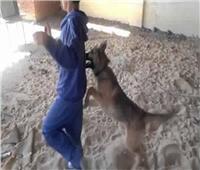 كلب مسعور يعقر 5 أطفال بالمنيا