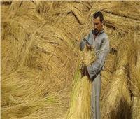 لزيادة الإنتاجية.. روشتة نصائح لمزارعي محصول الكتان خلال ديسمبر