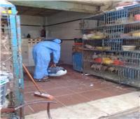 رش وتطهير 170 مسجد ومدرسة ومصلحة حكومية في «البحر الأحمر»
