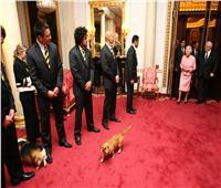 بعد أسبوعين على وفاة كلب ويليام وكيت..الملكة إليزابيث تودع «فولكان»