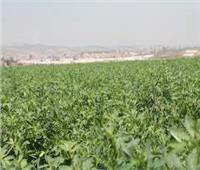 التعدي على الأراضي ورفع القيمة الإيجارية.. كارثة تهدد «التعليم الزراعي»