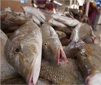 بورصة أسعار الأسماك في سوق العبور اليوم.. و سعر كيلوقشر البياض من ٦٠إلى ٨٦جنيه