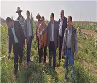 «الزراعة»: ندوات تشجيع المزارعين على منظومة الري الحديث بالوادي الجديد