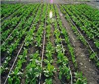 رى القليوبية: «الري بالتنقيط» يزيد إنتاجية المحصول.. وله فوائد للفلاح