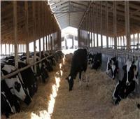 الزراعة تصدر 633 ترخيص تشغيل لأنشطة ومشروعات الثروة الحيوانية