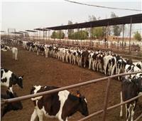 «الزراعة» تعتمد 32.6 مليون جنيه لتمويل صغار المربيين