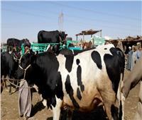 «الزراعة» تعلن موافقة الإمارات على استيراد الماشية الحية من مصر