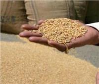 اطمئنوا| الحكومة: رصيد القمح يكفي 5.5 شهر والأرز لمدة 11.1 شهر