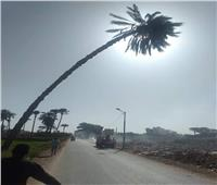 إزالة نخلة تهدد سلامة المواطنين بطريق المطاهرة البحرية في المنيا.. صور