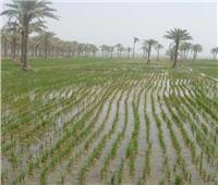 للمزارعين.. 9 نصائح للحفاظ على المحاصيل من الطقس السيء