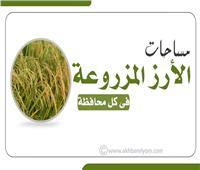 إنفوجراف  مساحات الأرز المزروعة فى كل محافظة