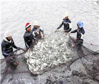«الثروة السمكية»: مصر الأولى أفريقيا في الاستزراع السمكي.. فيديو