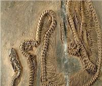العثور على حفرية أقدم ثعبان عاش في أوروبا قبل 47 مليون سنة