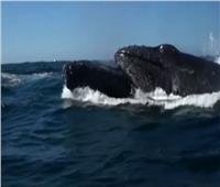 أستاذ أحياء بحرية: يكشف تفاصيل الحيتان المنقارية النادرة بالمكسيك  فيديو