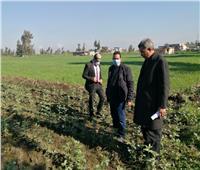 «الزراعة» تطمئن على توزيع الأسمدة  بكفر الشيخ
