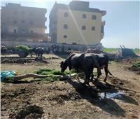 «الزراعة»: تنفيذ 10 مدارس حقلية جديدة لتوعية المزارعين والمربيين