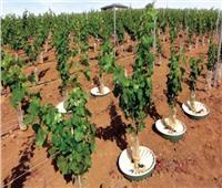 «صناديق مائية» لتوفير المياه وتوسيع الرقعة الزراعية
